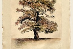 Lyndi-Sales-Hand-coloured-trees